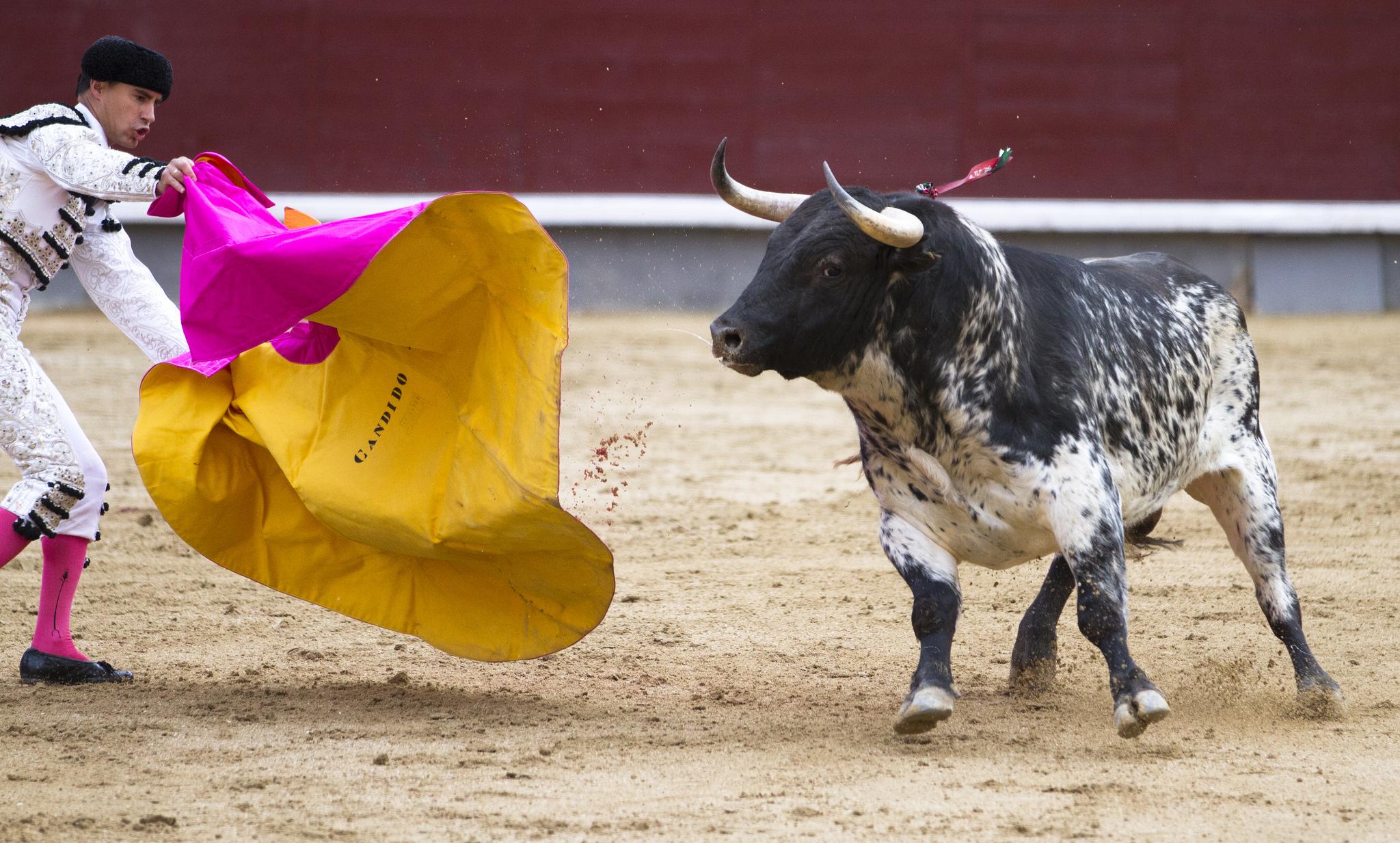 Испанская коррида – главная достопримечательность страны